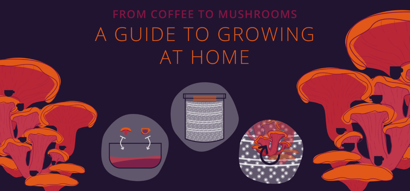 A guide to growing mushrooms